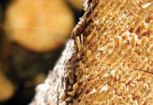 Softwood Tariffs